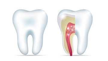 Anatomy of a Tooth | Top Dentist in Lafayette